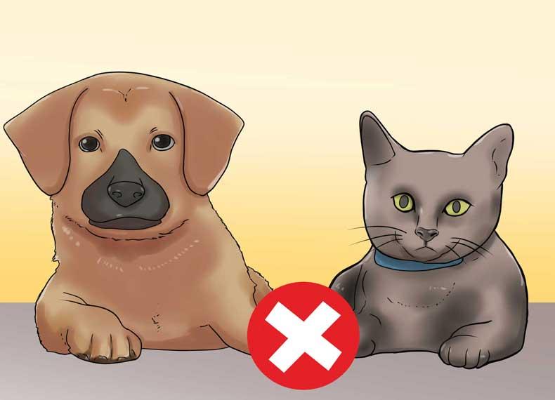 حیوانات خانگی و گردوخاک