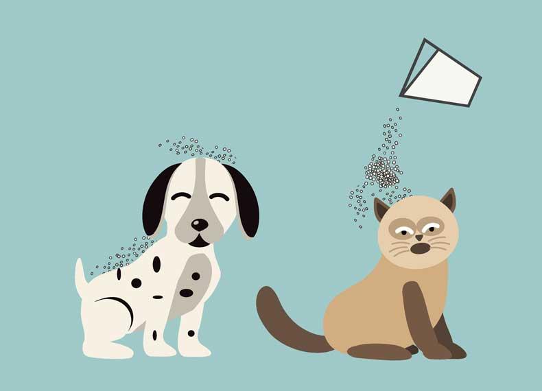 تمیز کردن گربه و سگ
