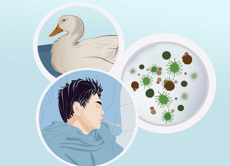 علت گرفتن آنفولانزای پرندگان
